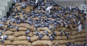 nti-news-waste-crop-farming-agriculture-uttar-pradesh