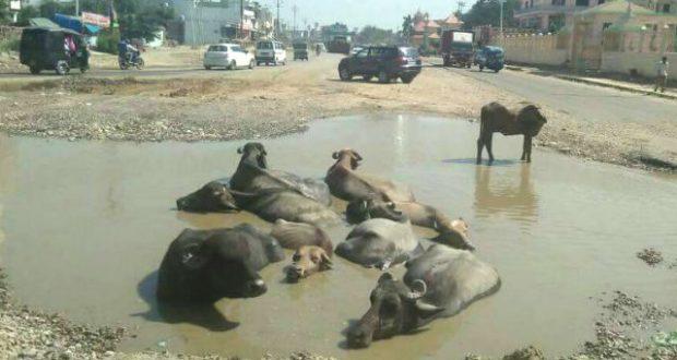 nti-news-HaridwarDehradun-NH-has-transformed-into-swimming