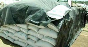 nti-news-thousands-quintal-rice-rotten-in-seoni-madhya-pradesh